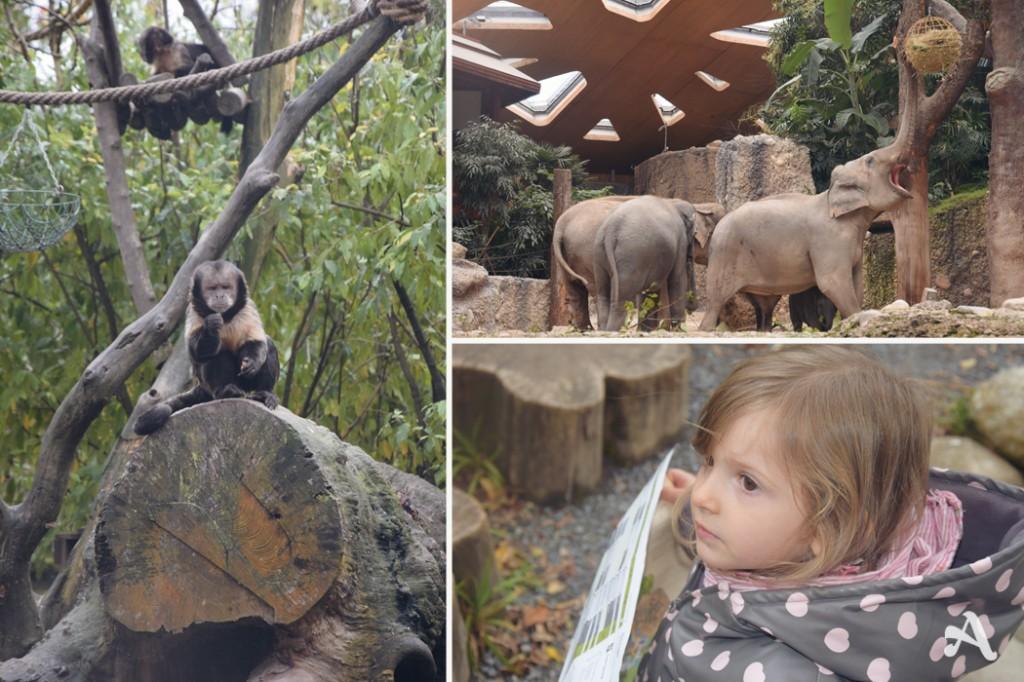 Visite_Zoo