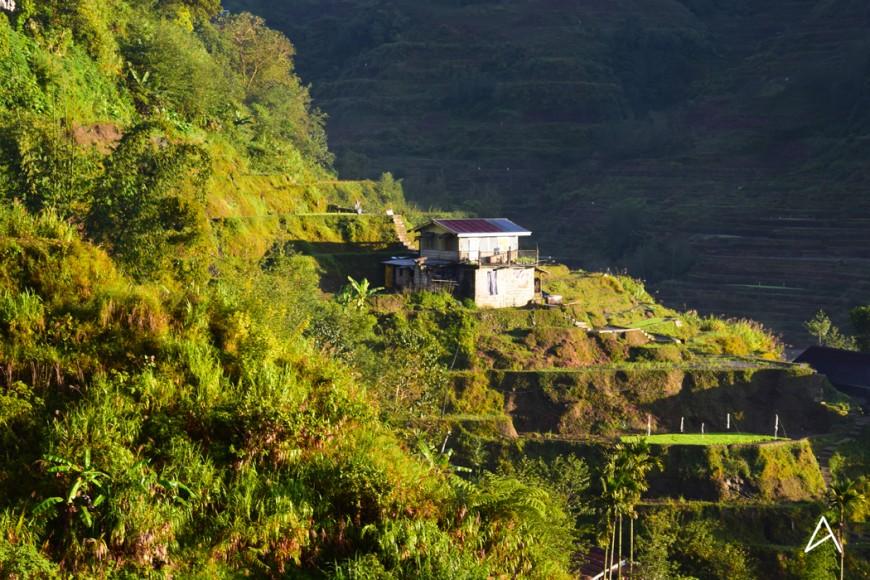 La vue depuis la terrasse du Banaue Homestay !