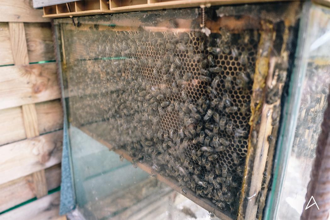 jardin_abeilles_6