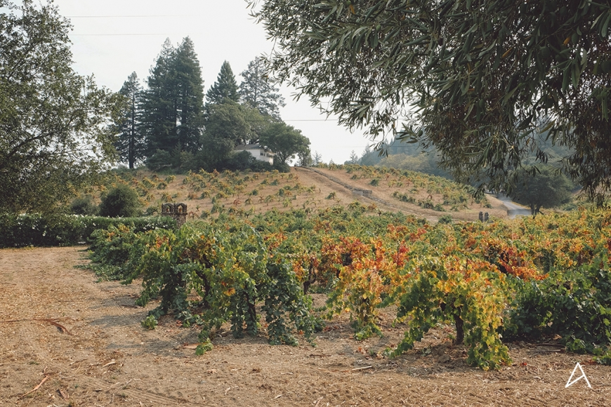 Sonoma_Valley