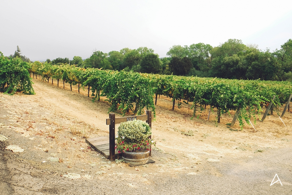 Sonoma_SipnCycle_10