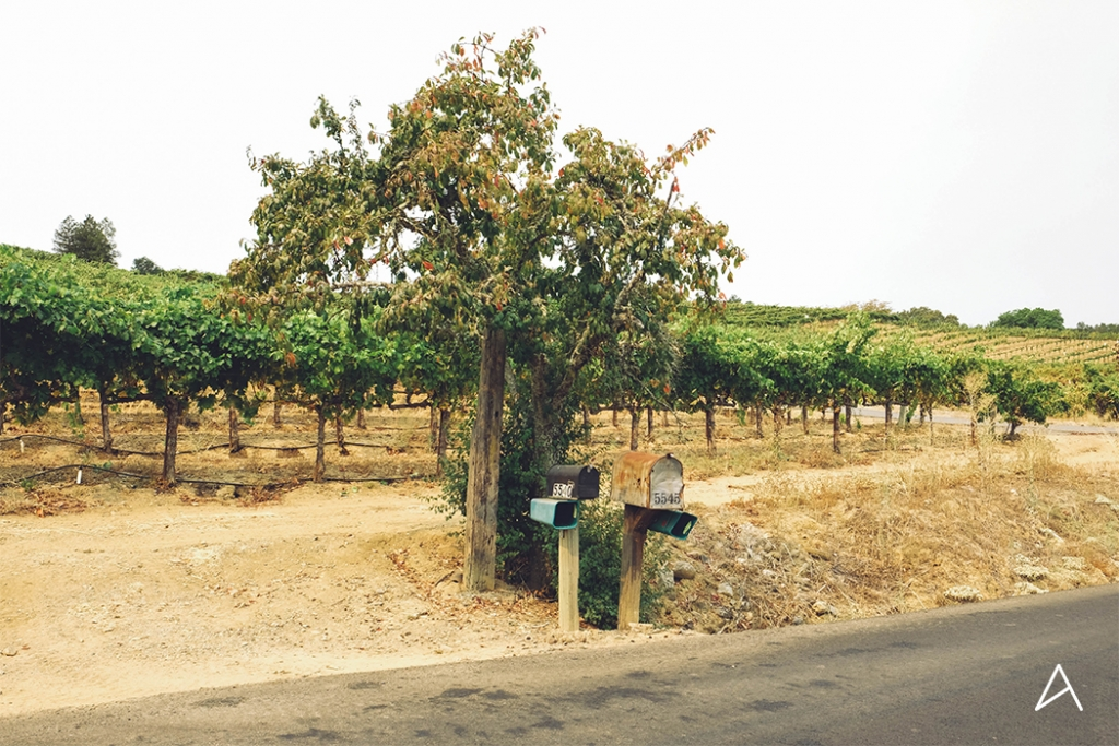 Sonoma_SipnCycle_9