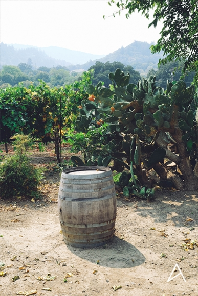 Sonoma_SipnCycle_vertical_2