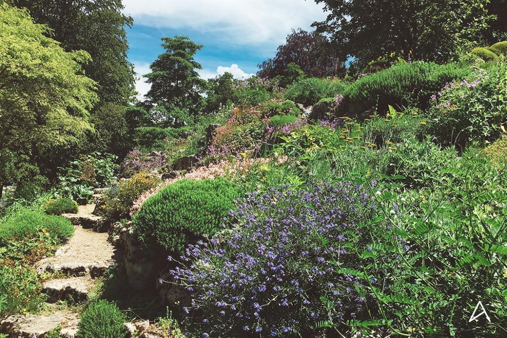 Jardin_botanique_Lausanne_9