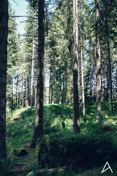 Freiburg_Im_Breisgau_Schluchsee_Vertical