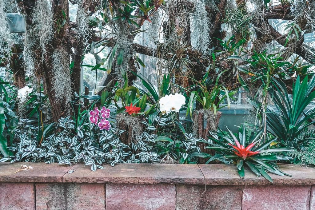 Le jardin des orchidées est composé de différentes variétés