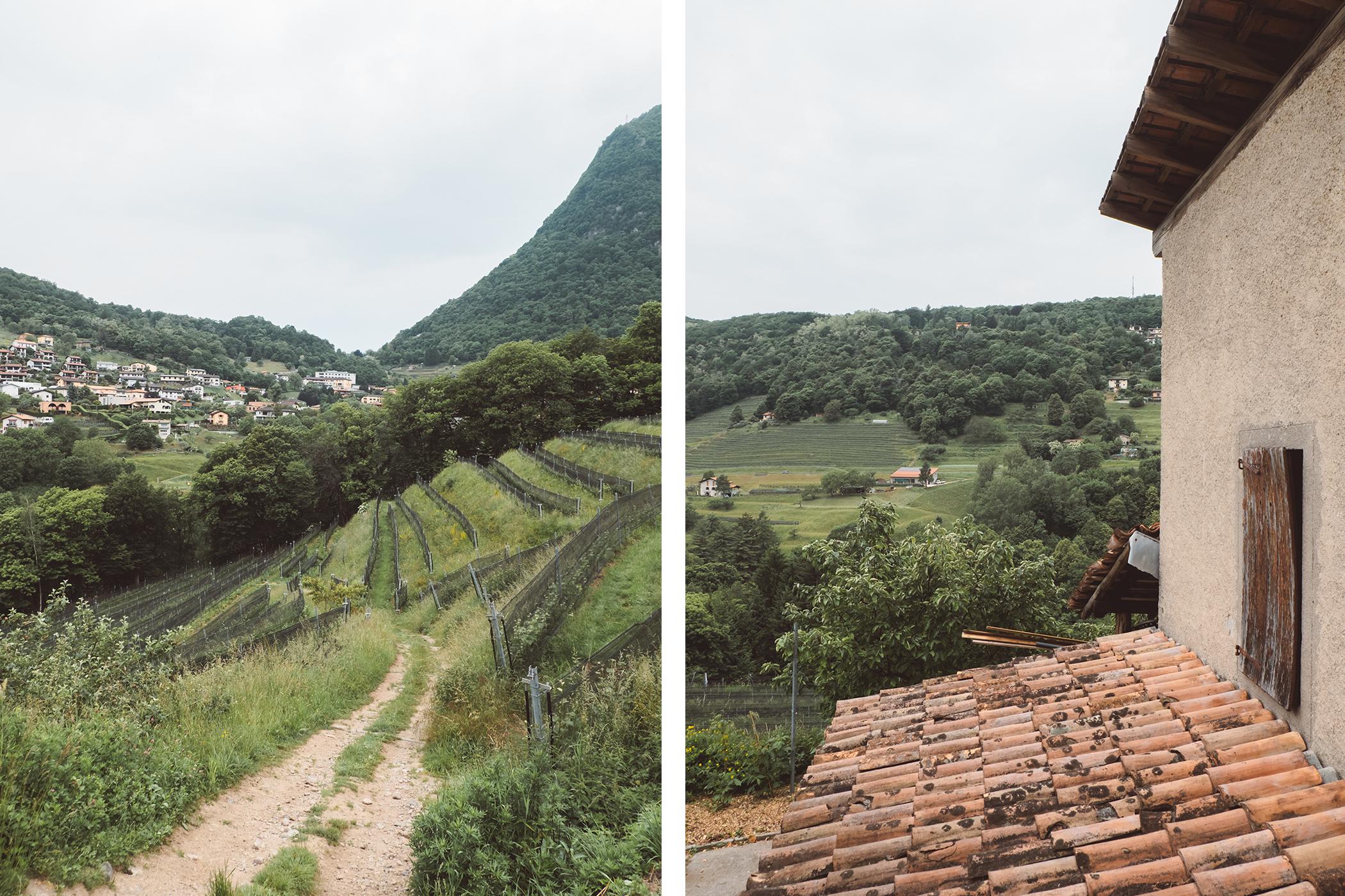 Les vignes d'Azienda Agricola Bianchi